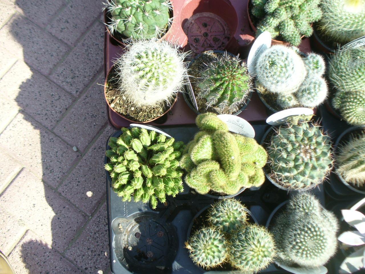 kakteen sukkulenten mix jardines de jaravia. Black Bedroom Furniture Sets. Home Design Ideas
